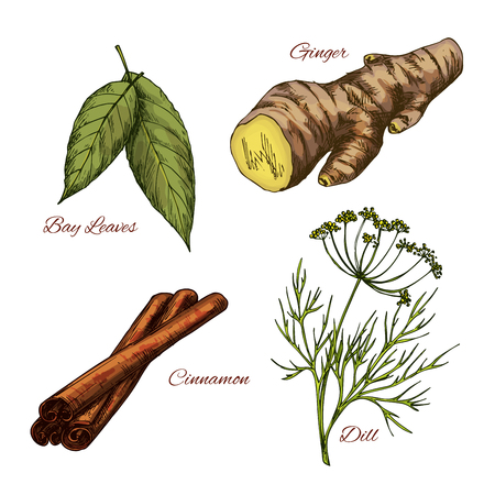 Vector Sketch icons of spice and herb seasonings