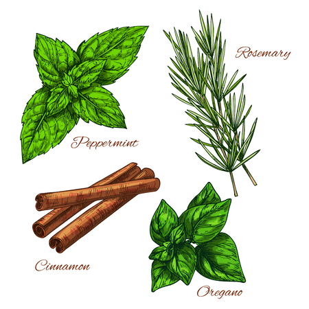 tarragon: Vector Sketch icons of seasonings herbs and spices Illustration