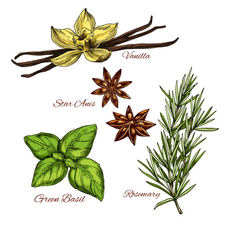 Sketch icons of vecor spices and herbal flavorings