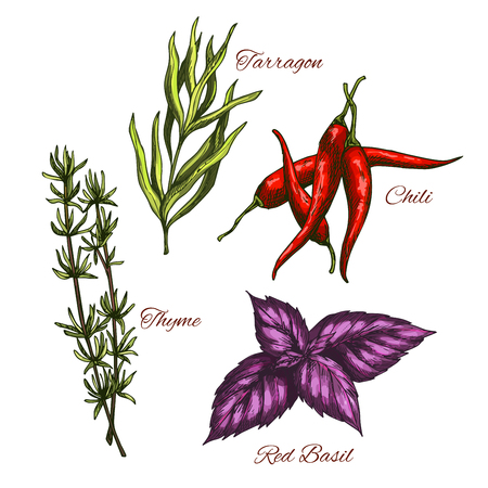 Sketch icons of vector spices and herbal flavorings