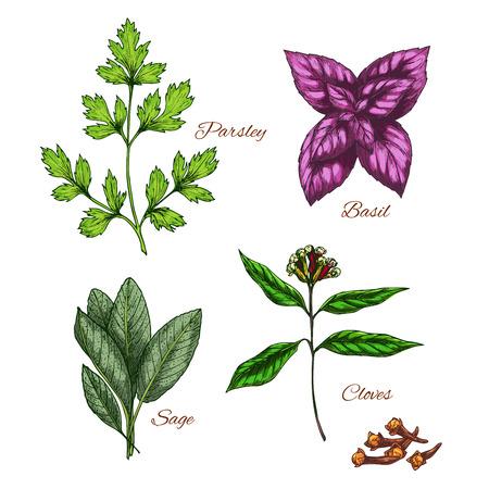 Vector icons of spice seasonings herb flavorings 向量圖像