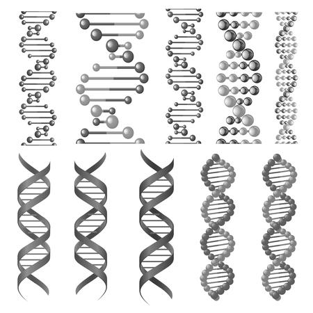 DNA 나선 또는 분자 사슬의 벡터 기호