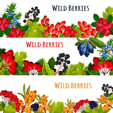 野生の果実と wildberry フルーツ ベクトル バナーを設定します。クランベリーや rowanberry とナナカマドの収穫。森やガーデン クロウメモドキ、スイカ