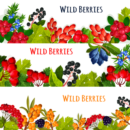 Wild berries and wildberry fruits vector banners set. cranberry or rowanberry and ashberry harvest. Forest or of garden buckthorn and honeysuckle, wild barberry or juicy blackberry or blueberry, haw or briar