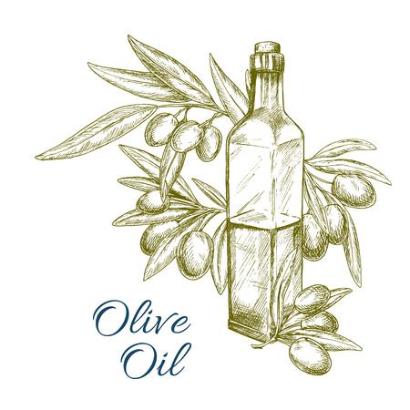 Olive oil bottle and olives branch vector sketch