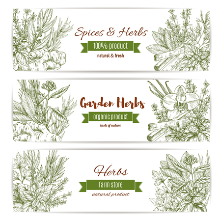 Herbs and spices sketch. Vector banners set of parsley and cinnamon, lavender and ginger. Seasoning cilantro, rosemary or oregano and cloves or anise. Condiment basil or thyme and dill or tarragon and cinnamon
