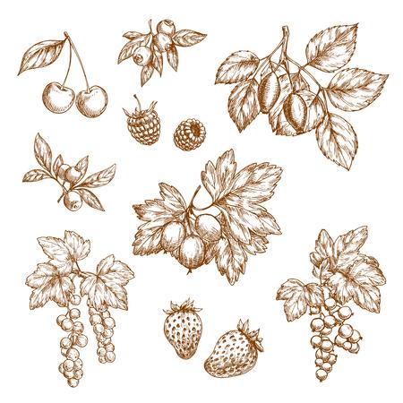 Waldbeeren und Früchte Vektor Skizze Symbole