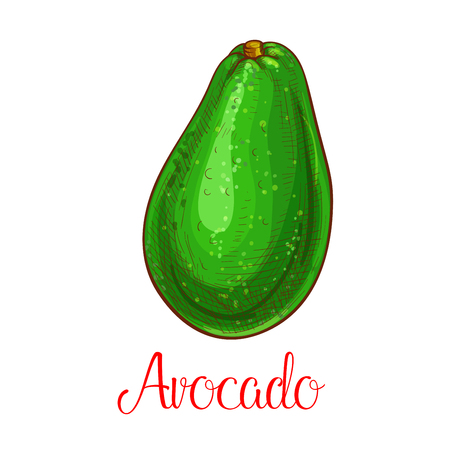 Avocado vector sketch icon of tropical fruit