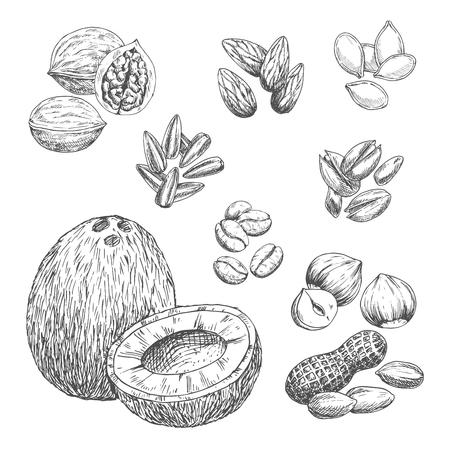 ナッツ、穀物、種子のベクトルのスケッチ アイコン  イラスト・ベクター素材