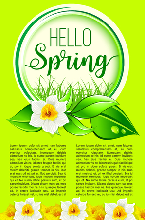 Spring holiday greeting poster of dafodil flowers Illustration