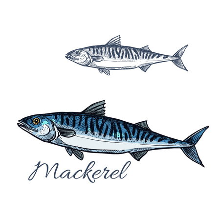 Mackerel Sea fish sketch for seafood design Illustration