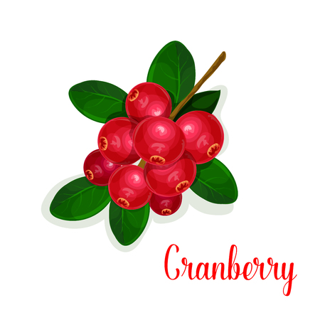 Cranberry fruit bunch with green leaf cartoon icon Illustration