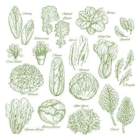 Salade blad en plantaardige greens schets set design
