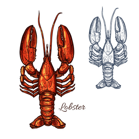 Lobster seafood animal or crayfish sketch