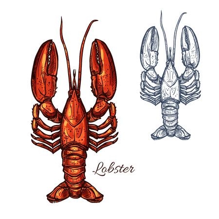 Lobster seafood animal or crayfish sketch
