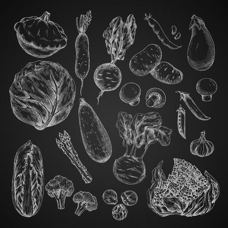 野菜、豆と黒板にきのこのスケッチ  イラスト・ベクター素材