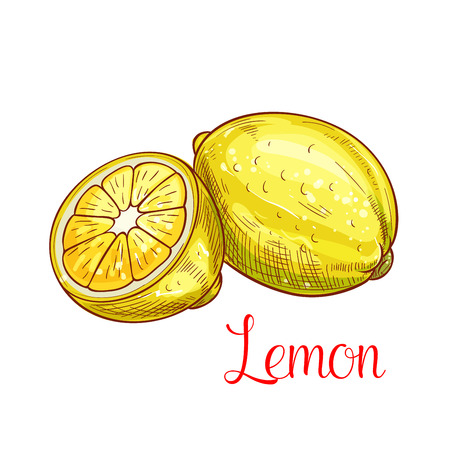 Lemon citrus fruit with slice isolated sketch