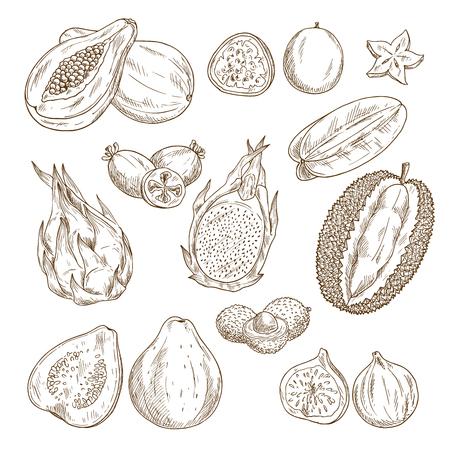 exotic fruit: Exotic tropical fruit isolated sketch set