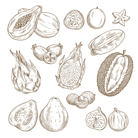 Exotic tropical fruit isolated sketch set