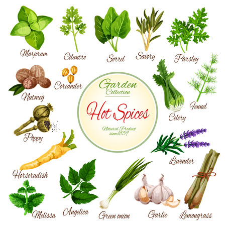 Hot spices, herbs and vegetable greens poster