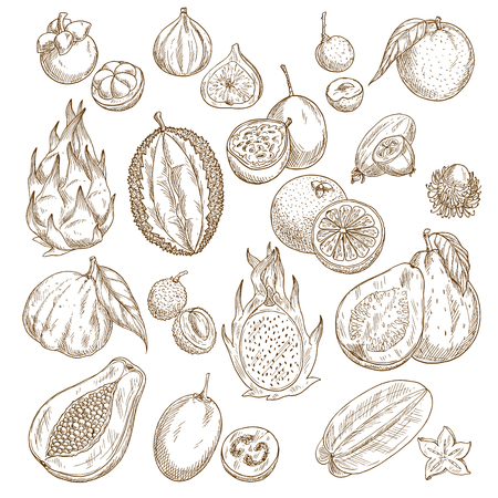 exotic fruit: Exotic tropical fruit isolated sketch set design Illustration