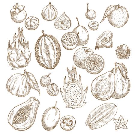 Exotic tropical fruit isolated sketch set design Illustration