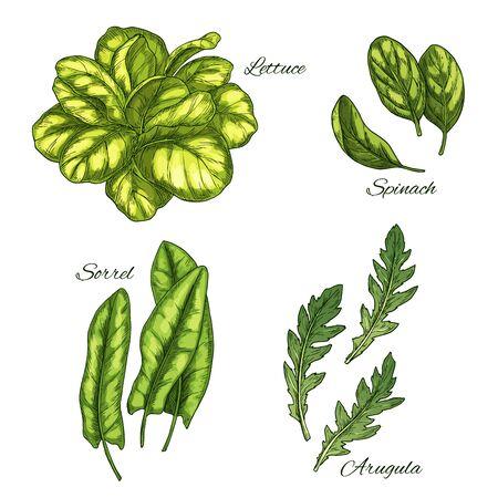 緑の野菜とサラダの葉のスケッチ セット