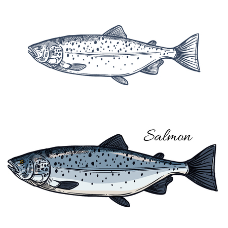 Salmon fish vector isolated sketch icon Иллюстрация