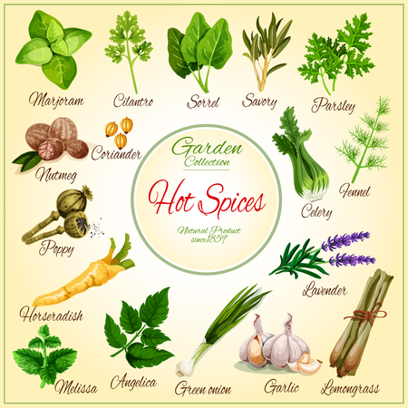 Vector poster of spice seasonings herb flavorings Illustration