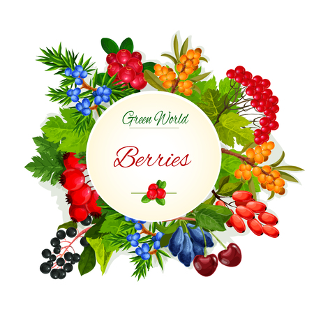 Vector poster of wild berries and ruits
