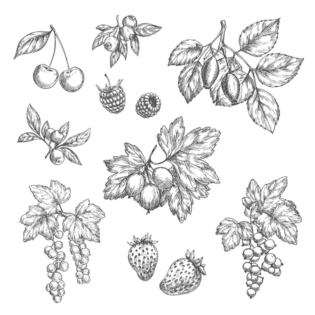 Vector sketch icons of fresh berries and fruits Illustration
