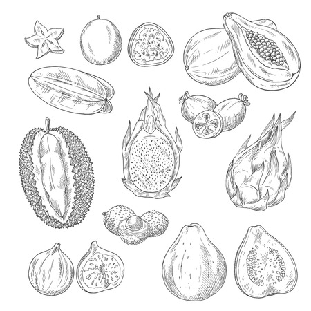 A Vector sketch icons set of exotic tropical fruits Ilustração
