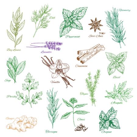 Ikony wektorowe przyprawy przyprawy lub aromaty zio? Owe