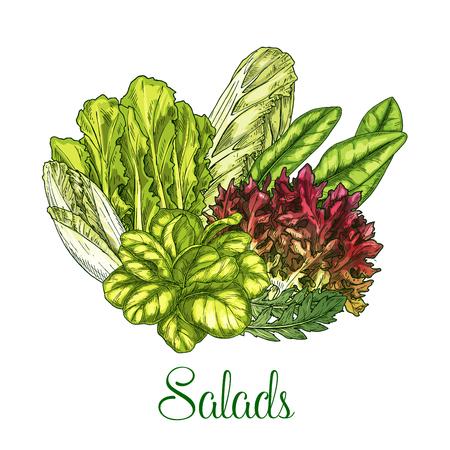 berro: Ensaladas y verduras de hoja vector poster