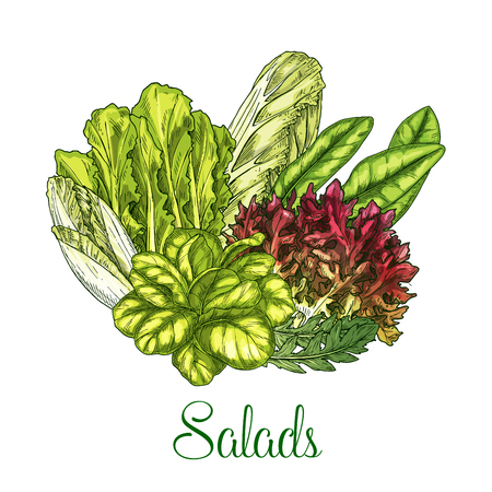 Salads and leafy vegetables vector poster Illustration