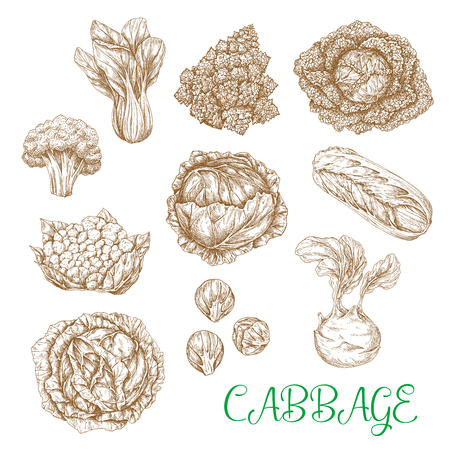 Vector sketch icons of cabbage vegetables Ilustração