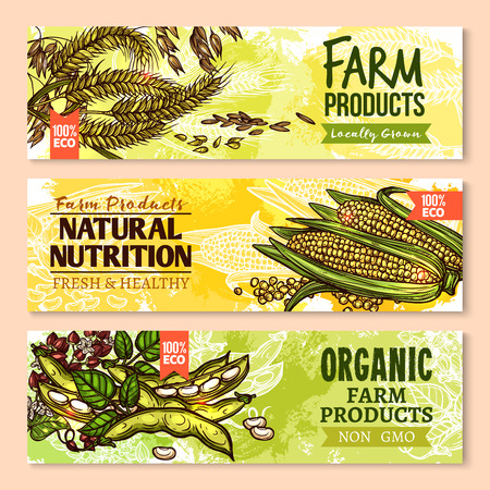 Vector banners of farm grown grain and cereals Imagens - 77607535