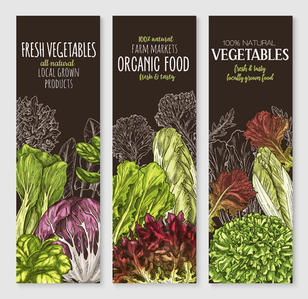 Vector banners of farm grown salads vegetables