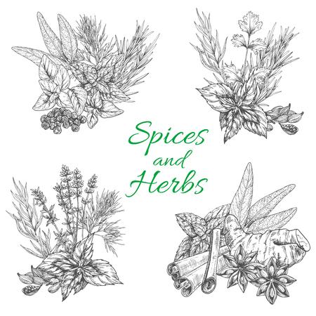 Vector schizzo manifesto di spezie e erbe aromatiche