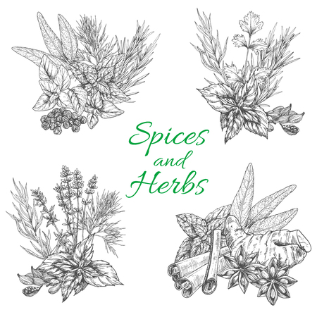 Vector sketch poster of spices and herb seasonings