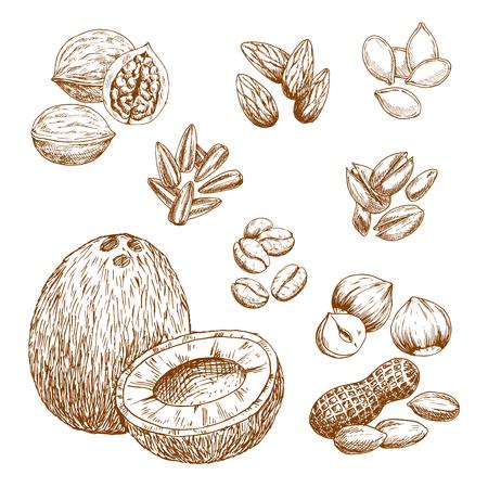 Noten en voedingszaden schets vector iconen van amandel- of pistachio-, kokos-, cashew- of pindakaas en koffiebonen. Geïsoleerde symbolen van walnoot of hazelnoot, zonnebloem en pompoenpitten of pijnboompitten