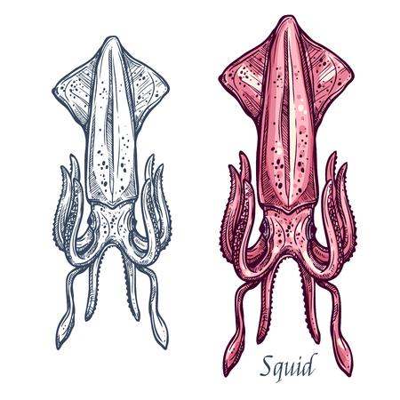 Squid sketch vector icon. Isolated ocean cuttlefish or cephalopod species. Isolated symbol for seafood restaurant sign or emblem, fishing club or fishery market