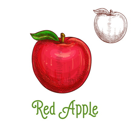 apple isolated: Apple vector sketch isolated fruit icon