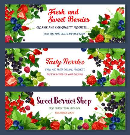 Berries banners for berry shop or farmer market. Vector harvest of blueberry and cranberry or black currant, sweet garden raspberry and juicy strawberry, briar and redcurrant or gooseberry