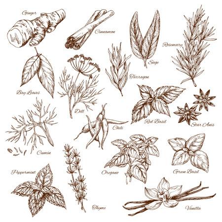 Vector schets iconen van kruiden en kruiden kruiden