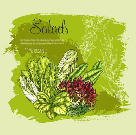 ベクトル ポスター サラダや緑豊かなレタス野菜  イラスト・ベクター素材