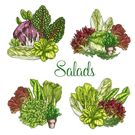 벡터 농장 샐러드 또는 잎이 많은 양상추 야채