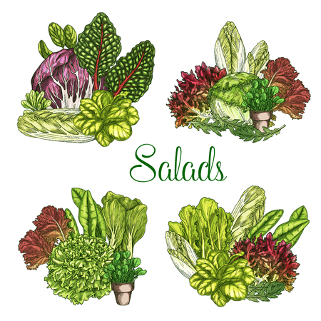 Vector boerderijsalades of bladige slagroenten