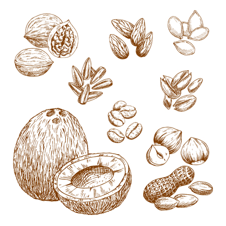 Vector sketch icons of nuts, grain and seeds Çizim