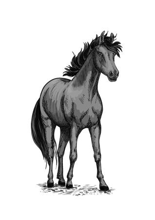Horse equine vector sketch symbol Ilustrace